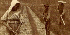 rice_field_slaves.jpg